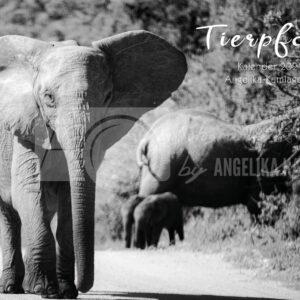 Tierpfade - ein Fotokalender mit Tieren aus Südafrika für 2021